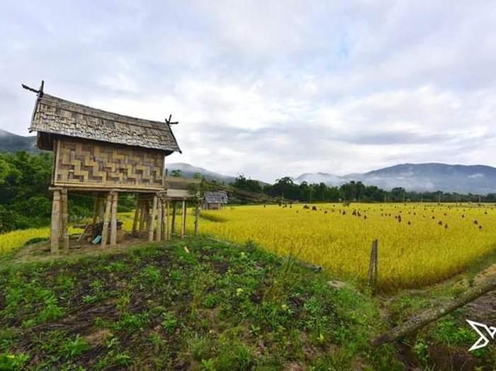 Desa di Luwu Utara