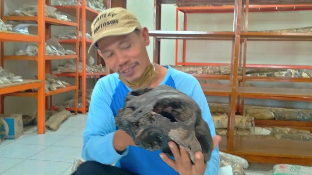 Nyaris Dijual ke Kolektor, Fosil Diduga Kepala Kuda Laut Diamankan di Kudus