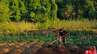 Hidup di Desa, YouTuber Li Ziqi Petik Buah hingga Bikin Mie Sendiri