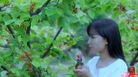 YouTuber Li Ziqi Menghilang, Diduga Ini Alasan Tak Unggah Video Lagi