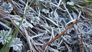 Dilanda Cuaca Ekstrem, Puncak Gunung Lawu Berselimut Es