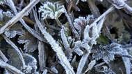 Puncak Gunung Lawu Berselimut Es, Pendaki Wajib Perhatikan Ini
