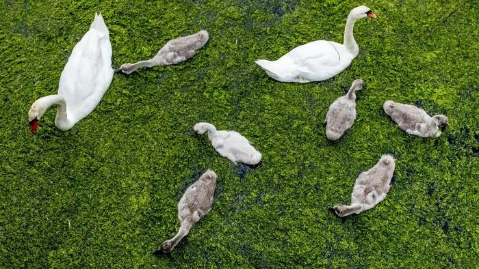 Di tengah Pandemi, kehidupan alam liar di Australia tetap terjaga. Ekosistemnya tetap terjaga seperti sedia kala.