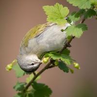 kontes fotografi burung 2020 Audubon Photography Awards