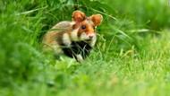 3 dari 32.000 Spesies Sangat Terancam Punah