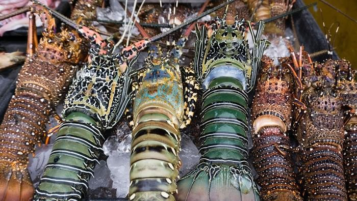 lobster indonesia