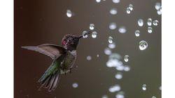 Foto Luar Biasa dari Kontes Foto Burung