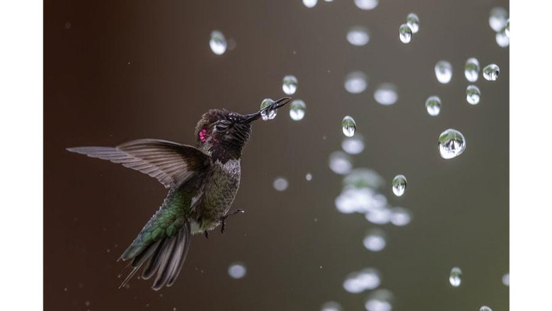 Audubon Photography Awards