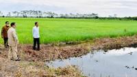 3 Fakta Terungkapnya Peran Prabowo di Lumbung Pangan
