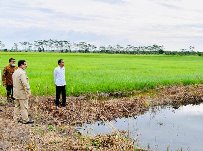 Presiden Jokowi hingga Menhan Prabowo Subianto meninjau proyek lumbung pangan di Kalteng.
