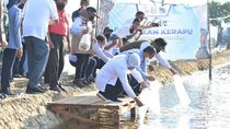 Datang ke Lamongan, Menteri KKP Dicurhati Pembudidaya Ikan Kerapu
