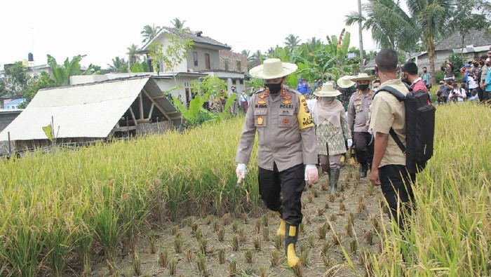 Panen Raya di Desa Kembang Kuning NTB saat pandemi Corona
