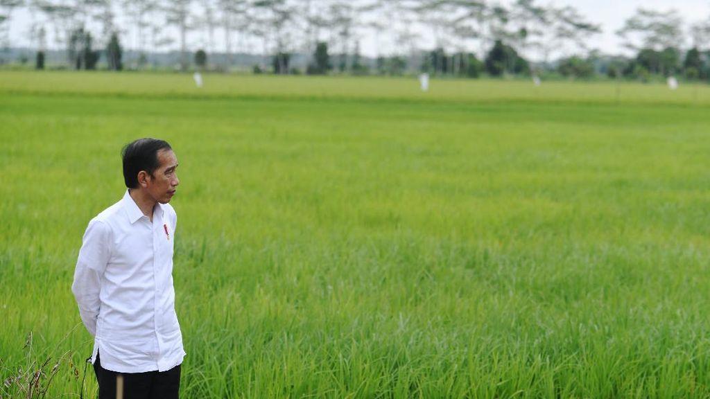 Kasus Corona Naik, Jokowi Minta 3T Diprioritaskan di 8 Provinsi