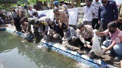 Forkopimda Kota Probolinggo Tebar Ribuan Bibit Ikan Nila Saat Pandemi