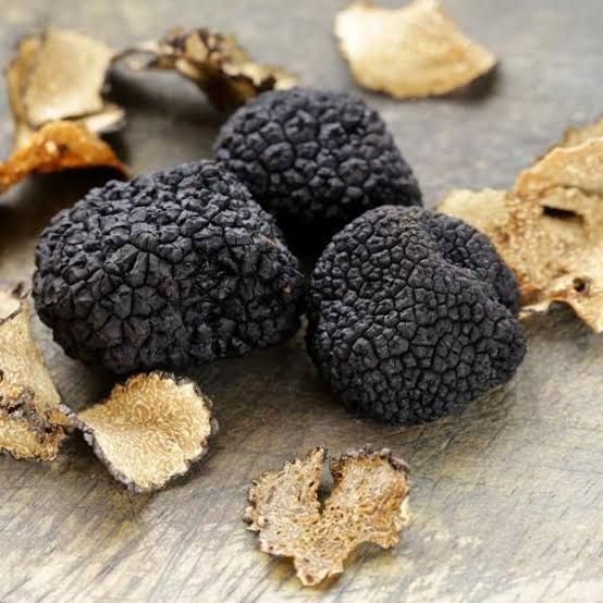 jamur truffle gratis