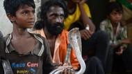 Lebih dari Satu Juta Orang Meninggal karena Gigitan Ular di India
