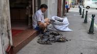 Sirip Hiu Dijual Bebas di Hong Kong dan China, Hati-hati Bahaya Merkuri!