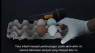 Diperbesar 1000 Kali, Telur Infertil Penuh Bakteri dan Tak Layak Konsumsi