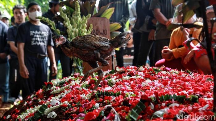 Salah seorang anggota keluarga melepas seekor ayam jantan di atas pusara  Yodi Prabowo, editor Metro TV yang diduga menjadi korban pembunuhan usai dikuburkan di TPU Wakaf Rempoa, Tangsel, Sabtu (11/7/2020). Menurut pihak keluarga, pelepasan ayam tersebut sesuai tradisi karena yang meninggal masih berstatus perjaka atau belum menikah.