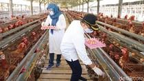 Banyuwangi Gelontor Telur hingga Buah ke Tenaga Kesehatan COVID-19