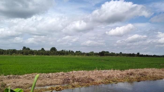 Kunci dari program pengembangan food estate di Provinsi Kalimantan Tengah adalah penyediaan air untuk irigasi areal sawah, terutama pada lahan potensial seluas 165.000 hektar