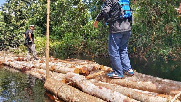 Aksi perambahan hutan (ilegal logging) secara besar-besaran marak di Kabupaten Siak, Riau (Chaidir Anwar Tanjung/detikcom)