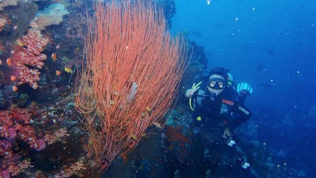 Lokasi diving di Sulawesi Utara.