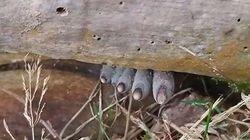 5 Fakta Seputar Dead Mans Fingers, Jamur yang Persis Jari-jari Mayat