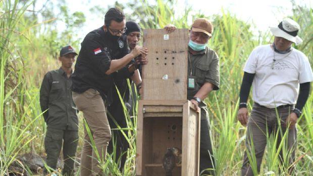 Kegiatan pelepasliaran burung pemangsa di SFF Bunder oleh BKSDA Yogyakarta.