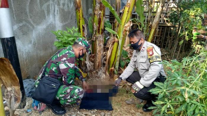 Penemuan mayat di bawah pohon pisang di Cengkareng.