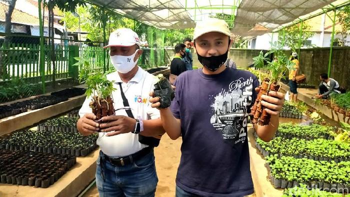 Permintaan Bibit ke DKPP Surabaya Meningkat untuk Budidaya Urban Farming