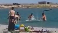 Anjing Laut Dipukuli Sampai Pingsan Biar Turis Bisa Foto, Terlalu!