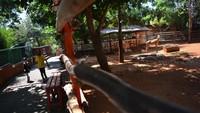 Maharani Zoo dan Wisata Bahari Lamongan (WBL) diketahui mulai dibuka kembali pada 11 Juli lalu dengan menerapkan protokol kesehatan setelah tutup hampir tiga bulan akibat pandemi COVID-19.