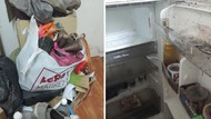 Viral Kisah Penyewa dari Neraka, Tinggalkan Rumah Kontrakan Penuh Ulat