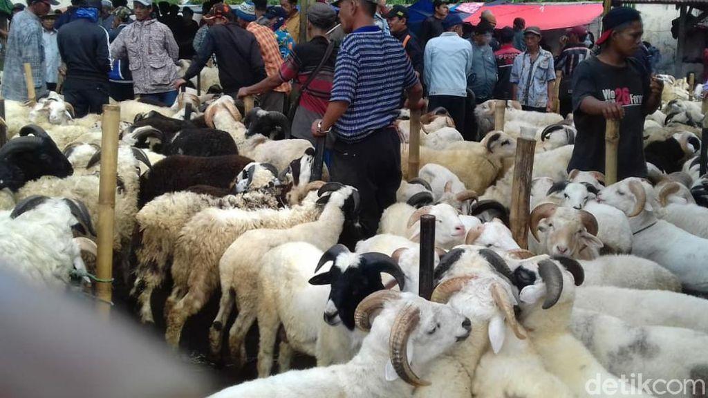 Jelang Idul Adha, Harga Domba di Pasar Hewan Cianjur Melonjak