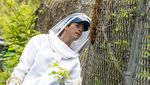 Pemburu Lebah di Kolumbia Siaga Penuh di Masa Pandemi, Ada Apa?