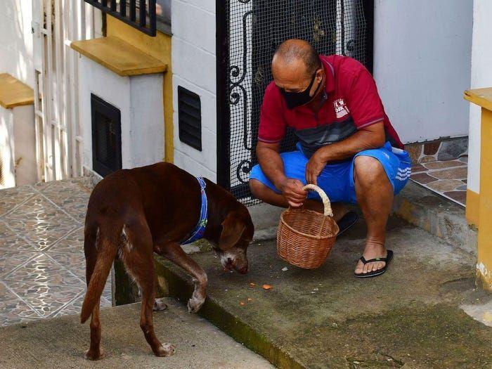 Anjing pengirim makanan