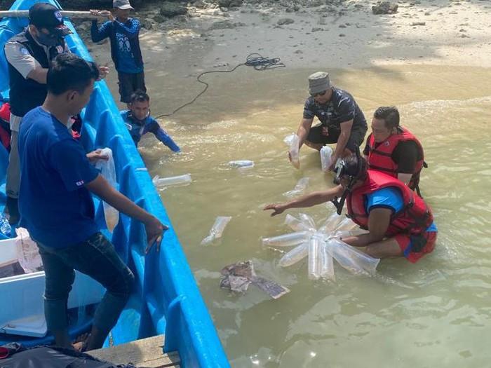 Bareskrim dan KKP lepasliarkan puluhan ribu benih lobster di Pantai Carita, Banten