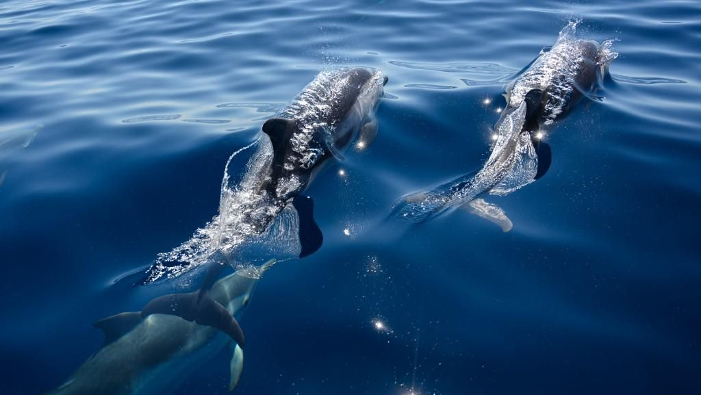 Usai Sudah Masa Liburan Paus dan Lumba-lumba