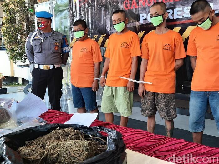 Para pengedar ganja kering di Sleman ditangkap polisi