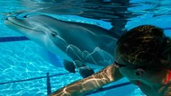 Sirkus Lumba-lumba Dilarang, Robot Rp 382 Miliar Jadi Solusinya