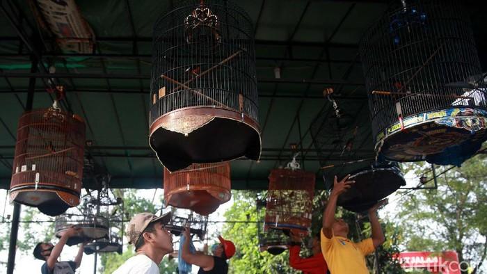 Masih banyak orang yang mengabaikan penggunaan masker saat pandemi COVID-19 ini. Seperti yang dilakukan para pecinta burung berkicau ini.