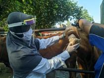 Dinas Peternakan Ponorogo Temukan Penyakit Cacing Mata di Hewan Kurban