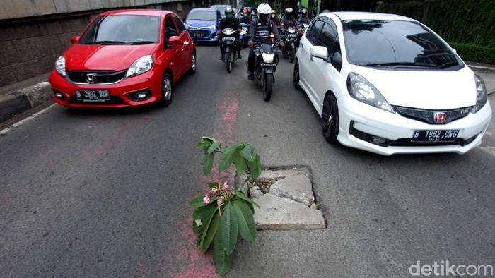 Ada yang tak biasa saat melintasi Jalan Gatot Subroto, Jakarta. Sebuah tanaman tampak berdiri di tengah jalan tersebut. Kok Bisa?