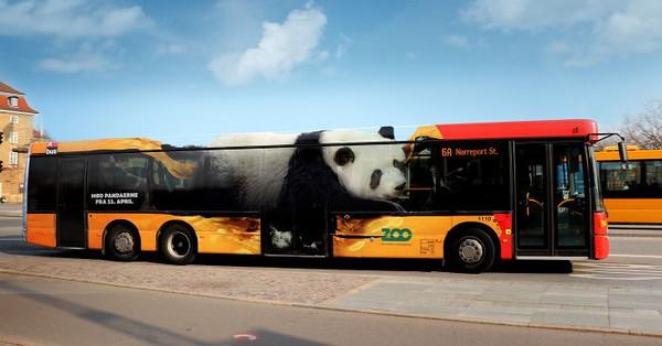 Iklan lain yang digunakan Copenhagen Zoo yaitu bergambar panda. Mereka memberi tahu bahwa di Copenhagen Zoo kedatangan penghuni baru. (dok Bored Panda)