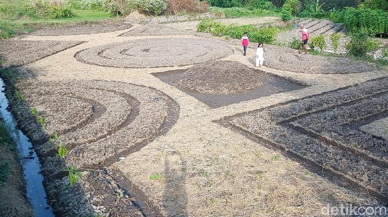 Kebun Sayur Batik di Klaten