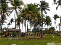 Pengunjung akan disuguhkan dengan udara sejuk pantai dan dihadapkan dengan area persawahan. Pohon-pohon kelapa akan membawa suasana sejuk dan asri yang bikin betah. (Kristina/detikcom)