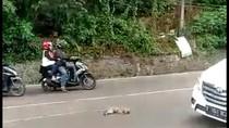 Seekor Monyet Ekor Panjang Mati Ditabrak Motor Saat Nyebrang di Lembang