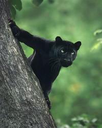 Jung mengungkapkan bahwa butuh kesabaran untuk mendapatkan foto kucing hitam raksasa ini. (Shazz Jung/Instagram)