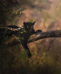 Dia menghabiskan waktu 2,5 tahun di Hutan Kabini, Karnataka, India. (Shazz Jung/Instagram)